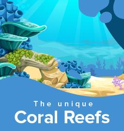 The marvellous underwater marine life