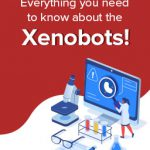 Meet the first living robot! – Xenobots