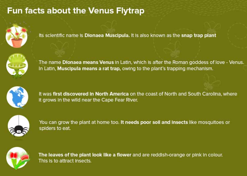 Fun Facts about Venus Flytrap