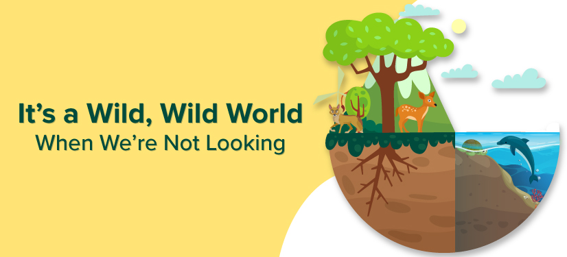 "World Environment Day Banner ""It's a Wild Wild World When We're Not Looking!"""