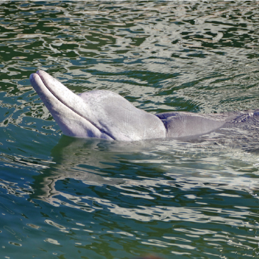 Humback dolphins in Australia trade 'treats' from the sea with humans in return for fish!