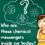 Hormones : The chemical messengers