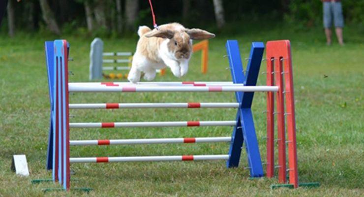 Kaninhoppning - The bunny hopping race