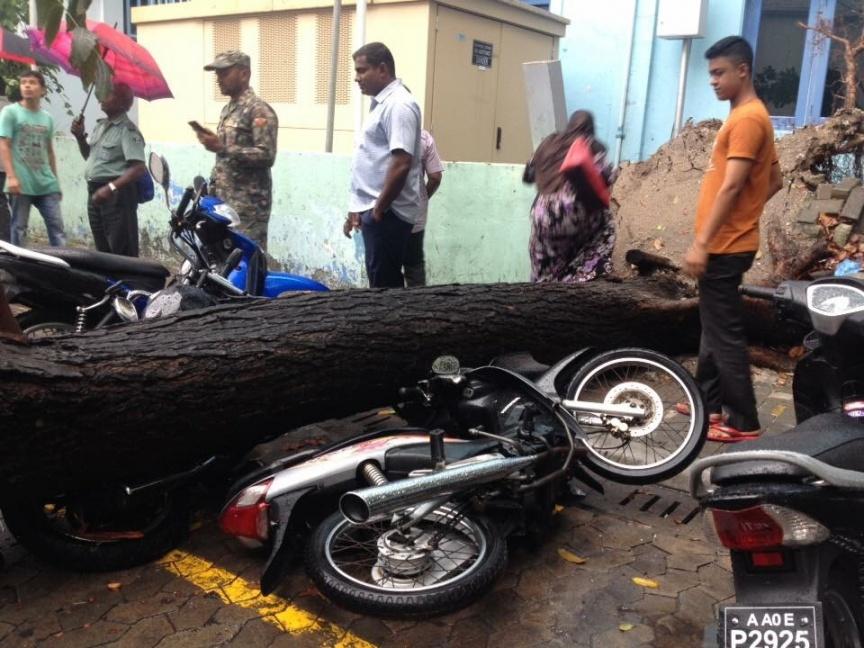 Tree near Ghazee Building falls causing damages