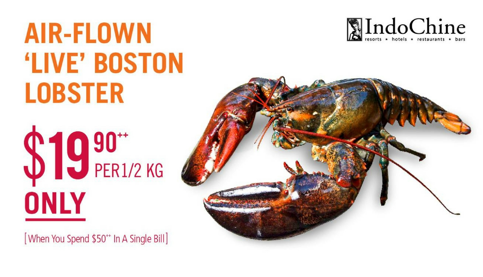 Air-flown 'Live' Boston Lobster Promotion - Suntec City