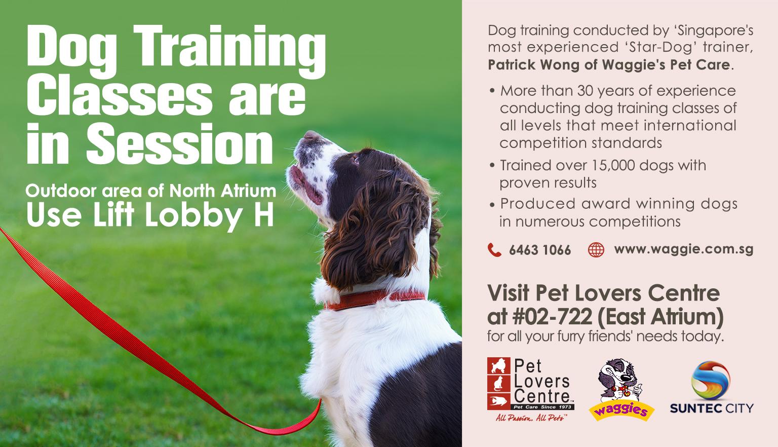 Dog Training Penang