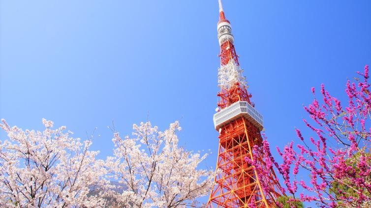 〈1Day Tour〉Tokyo's Best Cherry Blossom Spots Tour with Lunch