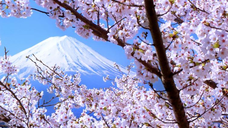 〈1Day Tour〉Enjoy Cherry Blossoms at Odawara Castle & Hakone Pirate Ship & Lake Kawaguchi
