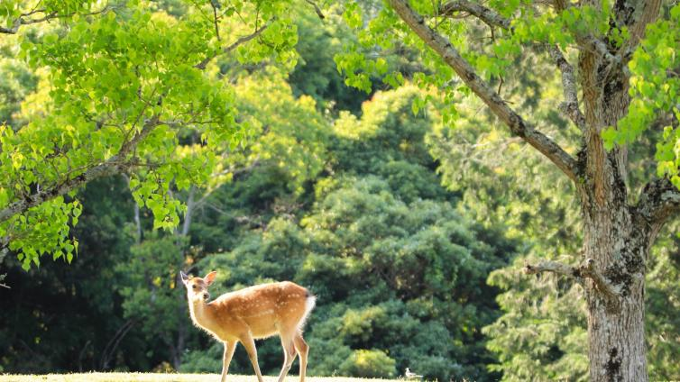 〈1Day Tour〉Kyoto & Nara 1-Day Tour with Lunch (Round Trip from Osaka)