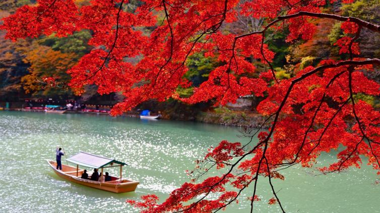 〈Morning Tour〉Enjoy autumn leaves, Arashiyama Walking Tour with Yakatabune Lunch Cruise