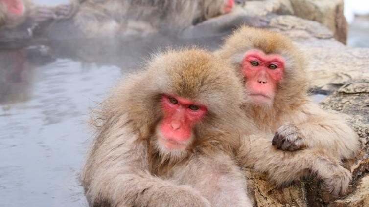 〈1Day Tour〉Snow Monkey Tour with Sukiyaki Lunch Departure from Tokyo