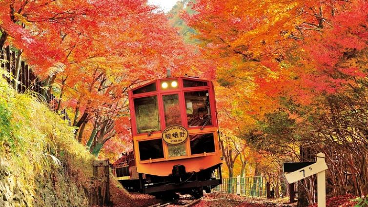 〈1Day Tour〉See the Beauty of Autumn Leaves, Sagano Scenic Railway Torokko Train & Hozu-gawa River Boat Ride