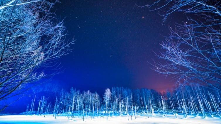 〈1Day Tour〉Joyful Winter Tour in Hokkaido! Visit Asahiyama Zoo, Aoi-Ike Light Up and Shirohige Falls!