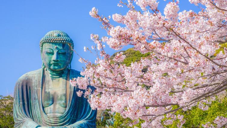 〈1Day Tour〉Best Cherry Blossom Viewing at Kamakura`s Great Buddha, Odawara Castle and Ninja Bus Experience!