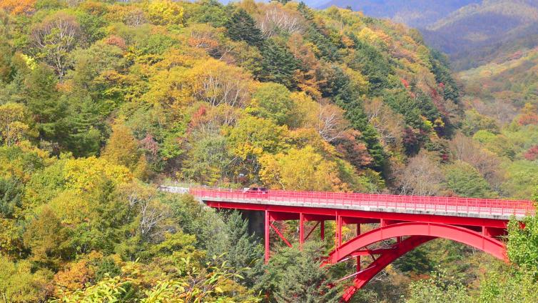 〈1Day Tour〉Best Scenery that Full of Autumn Colors in Kiyosato