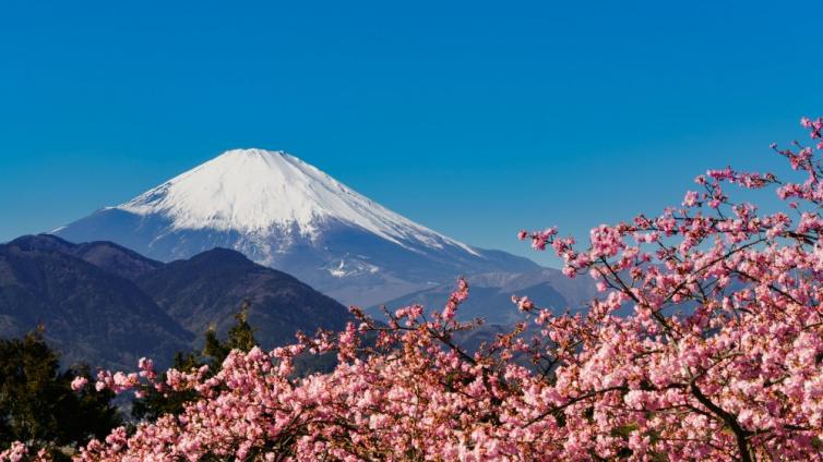 〈1Day Tour〉Highlights around Mt. Fuji! Kawazu Sakura and Nanohana, Hakone, and Buffet Lunch!