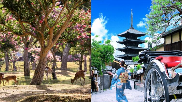 〈1Day Tour〉Kyoto & Nara 1-Day Tour with Lunch (Round Trip from Osaka)  [English Speaking]