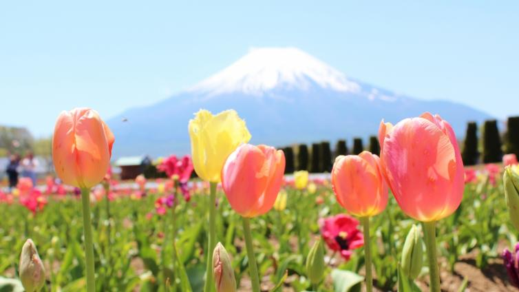〈1Day Tour〉Private Mt. Fuji & Hakone Tour with Lunch