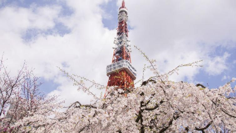 Tokyo's Best Cherry Blossom Spots Tour with Lunch