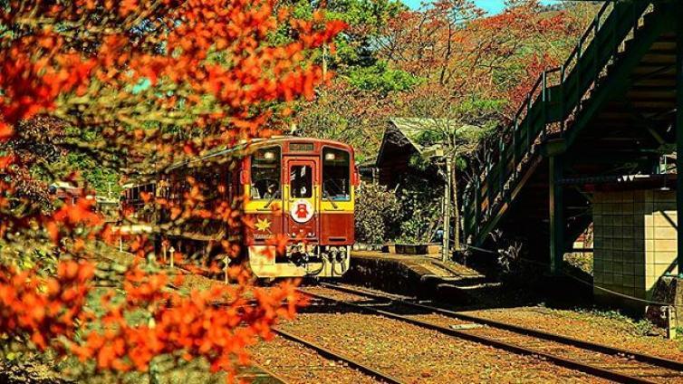 〈1Day Tour〉Ride on the Watarase Valley Railway & Takatsudokyo & Illumination at Ashikaga Flower Park!
