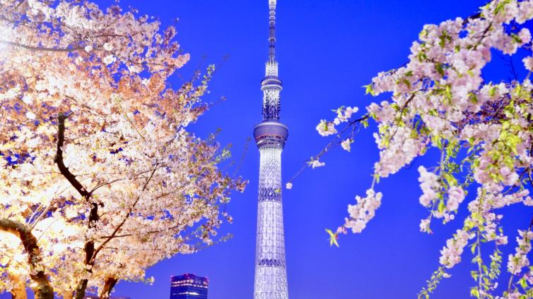 〈Afternoon Tour〉Tokyo's Best Cherry Blossom Walking Tour with Sumida River Night Flower Cruise!