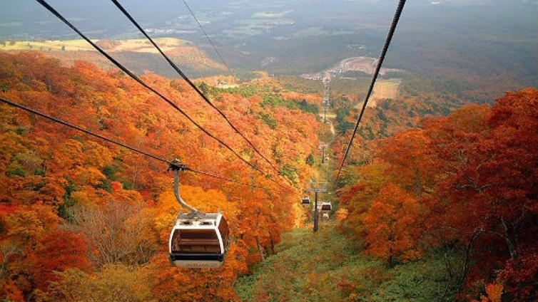 〈1Day Tour〉Ride on the Cable Car & Take a Sky Walk for Watching the Autumn Leaves