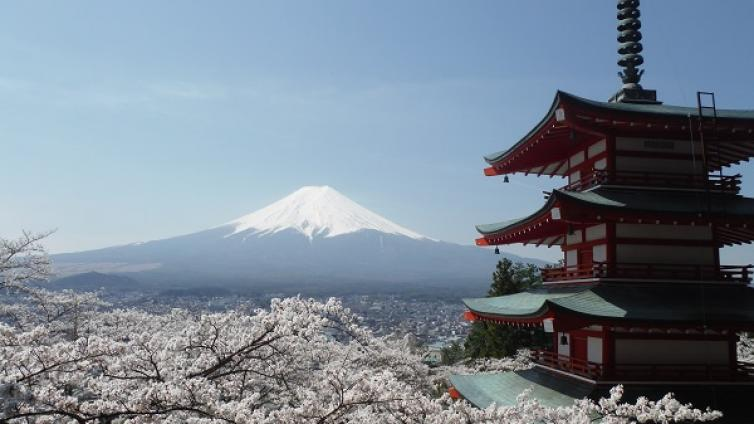 Fuji's Best Cherry Blossom Spots Tour plus All-you-can-eat Strawberry Picking with Lunch
