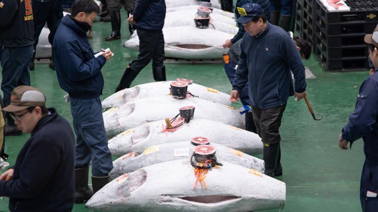 〈Morning Tour〉Tuna Auction Tour at Toyosu Market