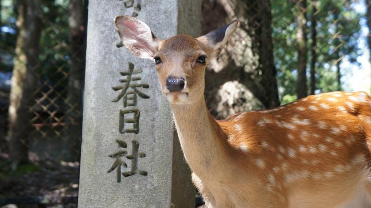 <1Day Tour>Kyoto & Nara 1-Day Tour with Lunch