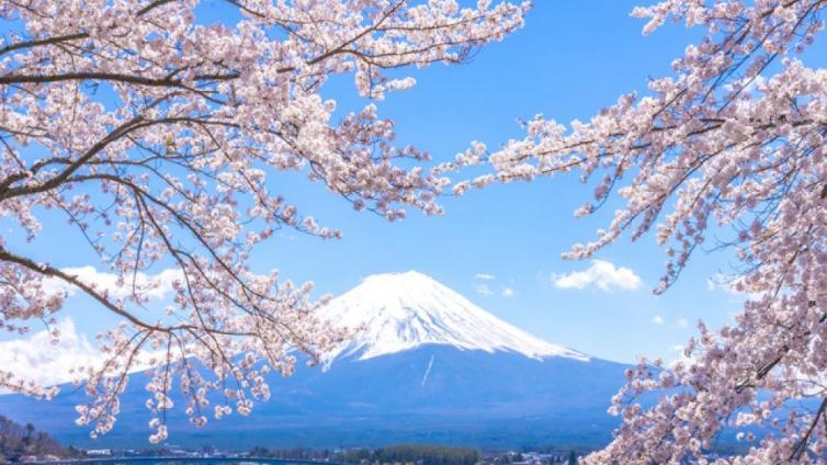 〈1Day Tour〉Cherry Blossoms at Odawara Castle & Hakone Pirate Ship & Lake Kawaguchi!