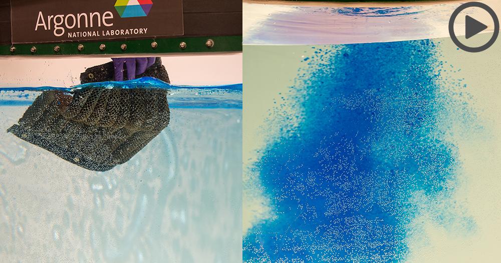 【海洋生物好朋友】清理石油神海綿,一顆可吸1.4加侖石油