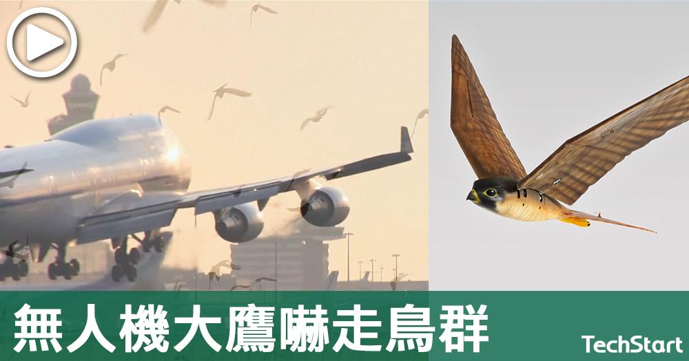 【航空安全好朋友】避免鳥擊情況出現,3D打印無人機大鷹嚇走鳥群