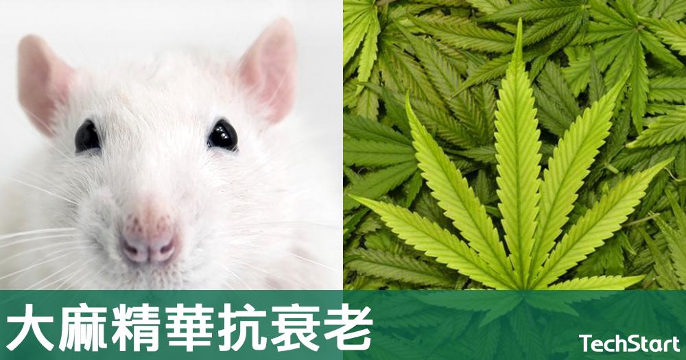 【抗衰老新法?】新研究發現大麻精華能防止腦部衰退,並改善認知能力