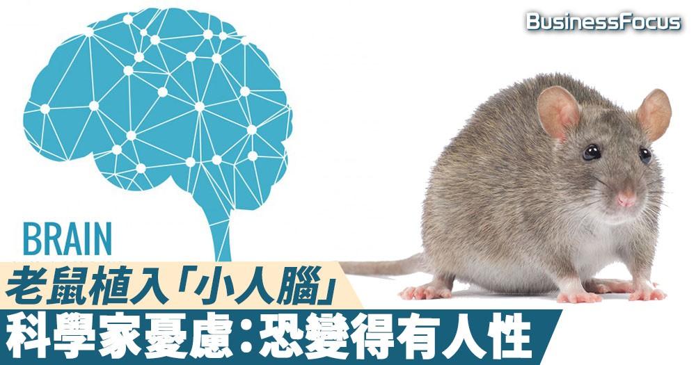 【物種界限】有人性的混合生命體?科學家成功為老鼠植入「小人腦」
