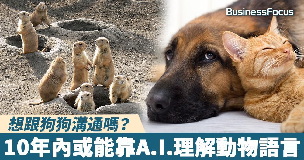 【翻譯神器】想跟狗狗溝通嗎?10年內或能靠A.I.理解動物語言
