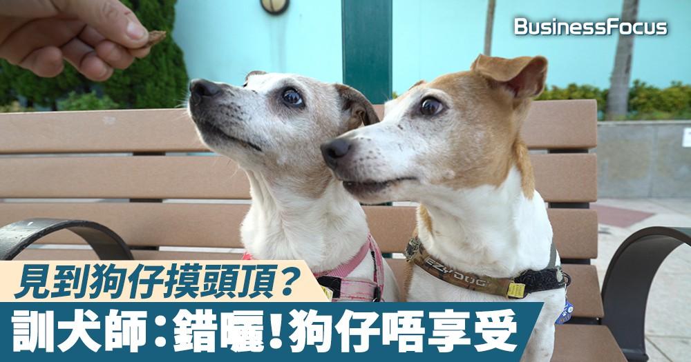 【專家教路】見到狗仔摸頭頂?訓犬師:錯曬!狗仔唔享受