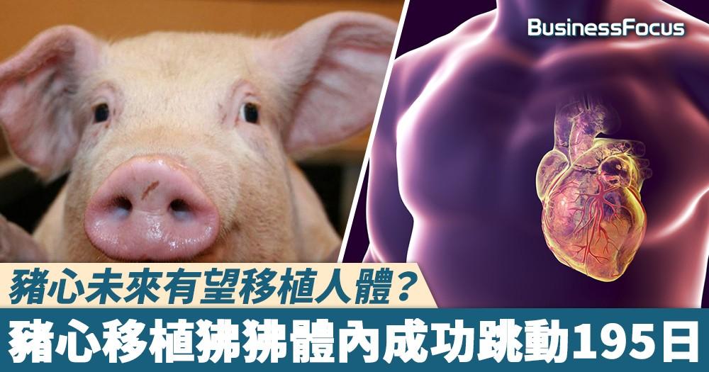 【異種移植】豬心未來有望移植人體?豬心移植狒狒體內成功跳動195日