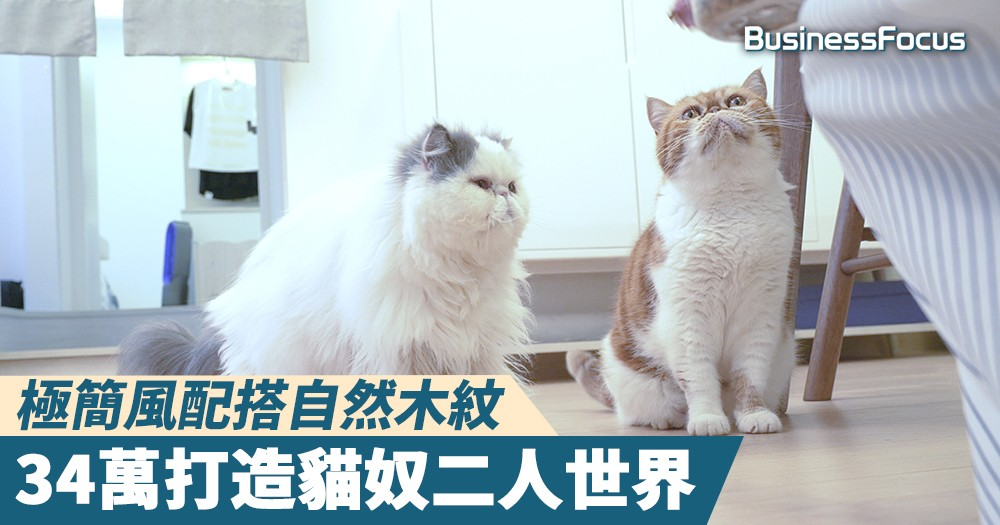 【高品家居】極簡風配搭自然木紋,34萬打造貓奴二人世界