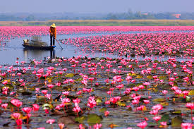 Red_Lotus_Lake