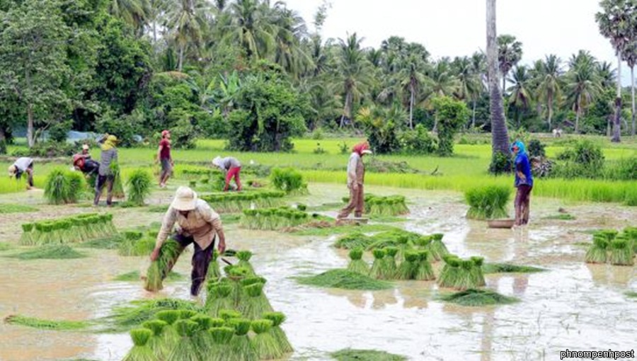 Cambodia aims to export one million tonnes of rice to Indonesia