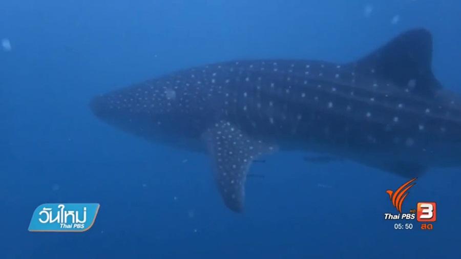 90_Whale-shark.jpg