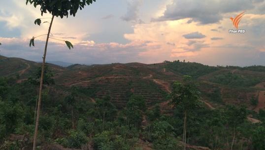 พบนายทุนรุกป่า จ.เพชรบูรณ์ ปลูกยางพารากว่า 4,000 ไร่
