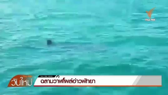ฉลามวาฬโผล่อ่าวพัทยา