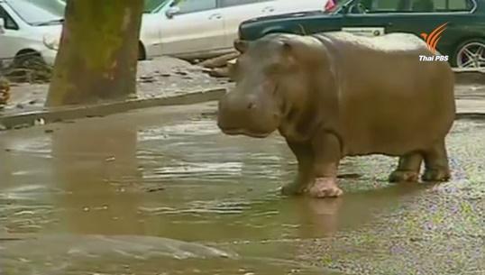 สัตว์หลุดออกจากสวนสัตว์ในจอร์เจียเหตุจากน้ำท่วมหนัก