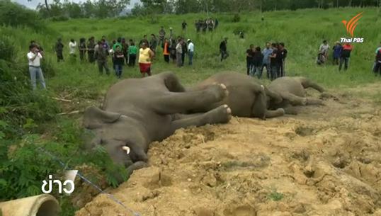จนท.พบร่องรอยเฉือนปลายงวงลูกช้างป่าละอู คาดมีผู้รู้เห็น
