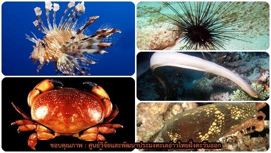 """เปิดตัว """"สัตว์ทะเลมีพิษ"""" ที่ไม่ใช่แค่แมงกะพรุน เตือนเที่ยวทะเลระวัง-พิษถึงตายได้เหมือนกัน"""