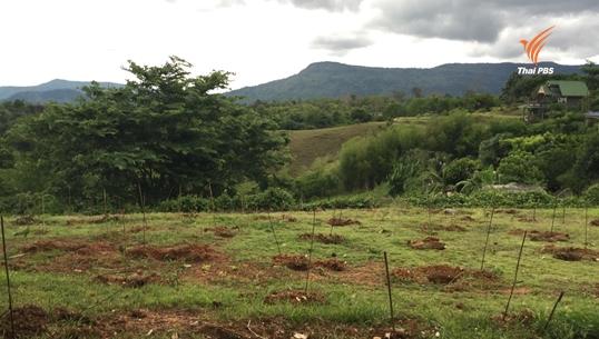 กรมอุทยานฯ เร่งฟื้นฟูป่าทับลานหลังคดีบุกรุกสิ้นสุด