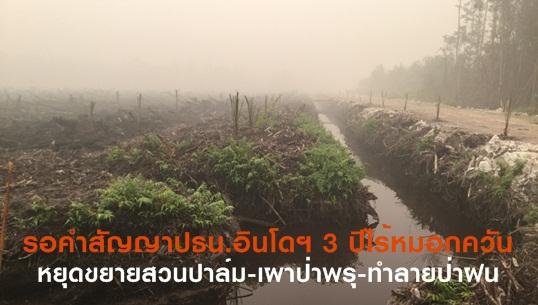 """รอคำสัญญาปธน.อินโดฯ- 3 ปี """"ไร้หมอกควัน"""" หยุดขยายสวนปาล์ม-เผาป่าพรุ-ทำลายป่าฝน"""