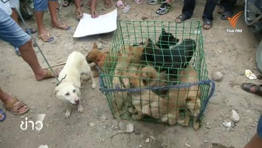 กลุ่มพิทักษ์สัตว์ในจีนต่อต้านการกินเนื้อสุนัข