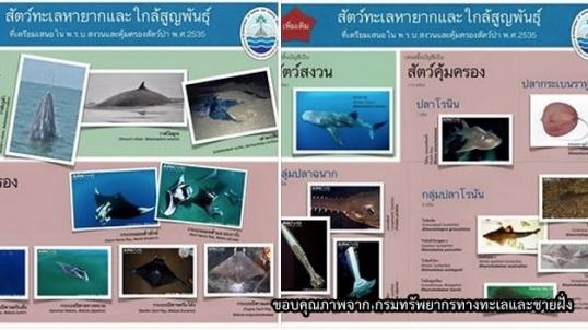 ระบุดัน 24 สัตว์ทะเลเป็นสัตว์สงวน-คุ้มครอง เพื่อให้การวิจัย-อนุรักษ์-ท่องเที่ยวยั่งยืนขึ้น